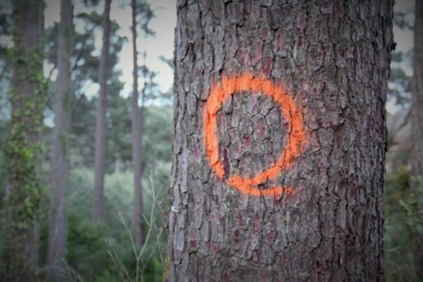árvores marcadas para abate no PNSC