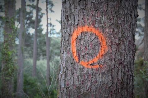 Árvores marcadas para abate no PNSC - Foto ABeja